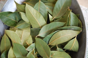 Kathleen's Bay Leaves